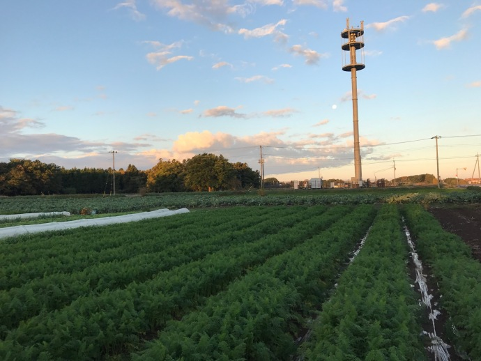 無農薬人参収穫体験用の畑